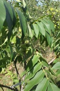 Hoor-skogstradgarden (4)